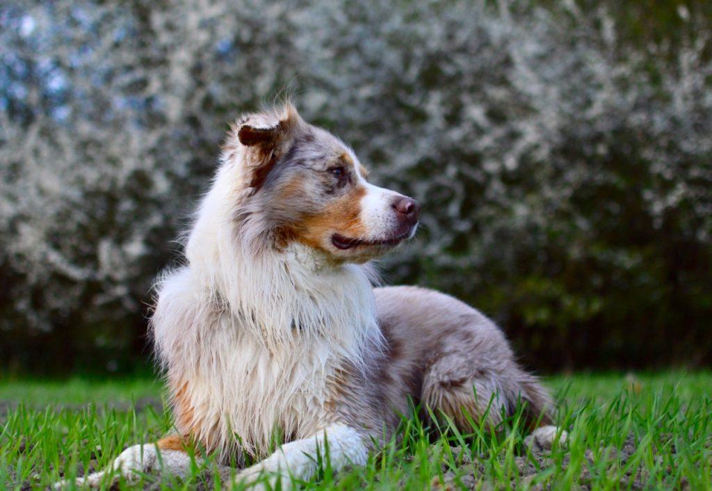 Der perfekte Hundetrainer