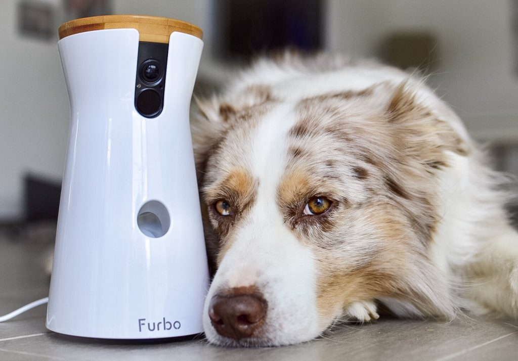 [Werbung] Die Furbo Hundekamera. Buddy allein zu Haus.