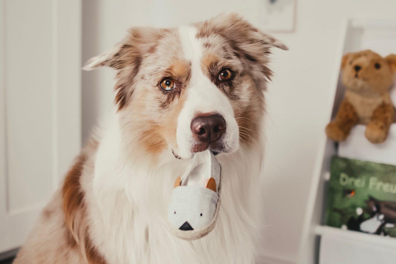 Baby & Hund. 5 Erfahrungsberichte