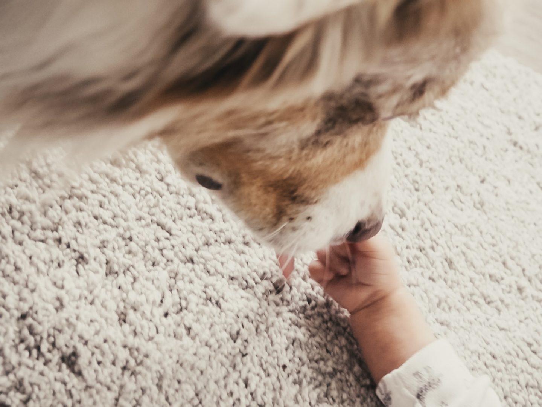 Baby & Hund. Mein Erfahrungsbericht